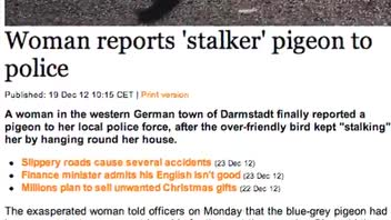Woman Calls Police Due to Stalking Pigeon