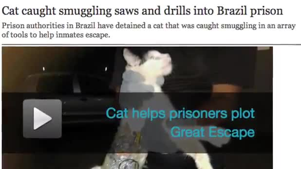 Smuggling Cat Busted at Brazilian Prison