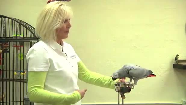 Teaching Parrots to Step Up and Down