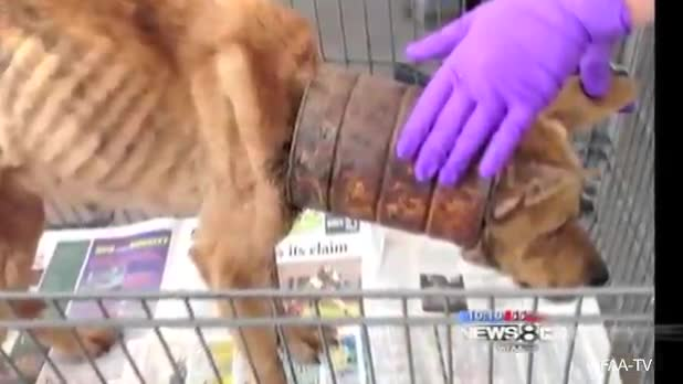 Malnourished Dog Discovered With Rusted Can on Neck