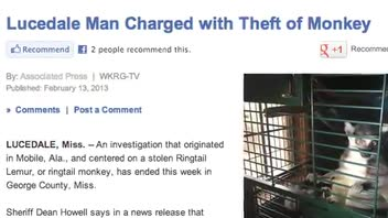 Man Steals Pet Lemur and Holds for Ransom
