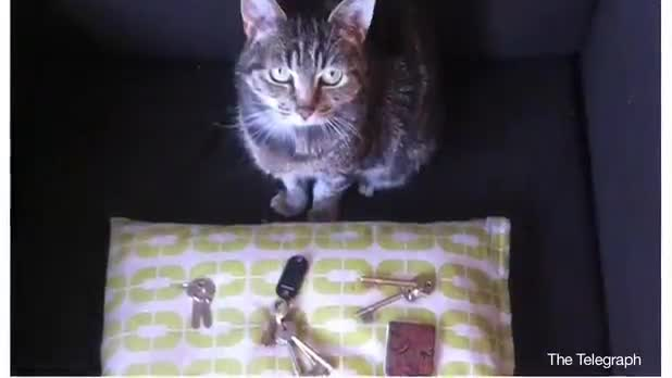 Cat Steals Key Sets From Neighbors' Homes