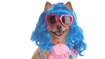 Halloween 2012: 5 Hottest Celebrity Dog Costumes