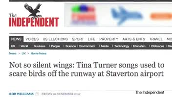 Tina Turner Songs Used at Airport to Scare Birds Off