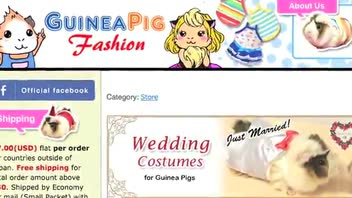 Website Offers Fashionable Attire for Guinea Pigs