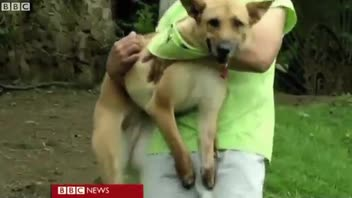 Dog Walks on Prosthetic Legs After Cartel Cuts Paws Off