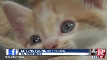 Man Arrested for Keeping Kittens in Freezer