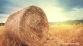 Thief Steals 1.5 Tons of Hay for Girlfriend