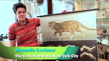 Unusual Gift for Fathers - Zoological Cat Poster