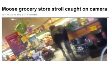 Moose Dies After Wandering Through Grocery Store