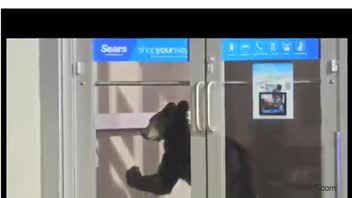 Bears Find Their Way to a Sears Store