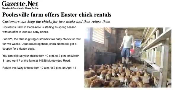 Rent a Chick for Easter