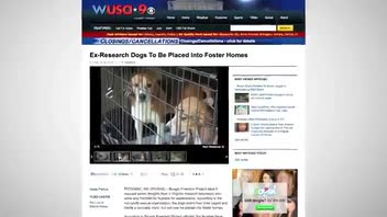 Laboratory Beagles Begin to Experience a New Life