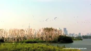One of the World's Deadliest City for Birds