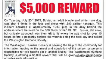 Humane Society Offering $5,000 Reward After Pit Bull Shot Four Times