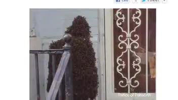 Bizarre Bee Swarm Spotted in DC
