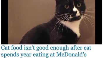 Cat Addicted to McDonald's Food Rescued by SPCA